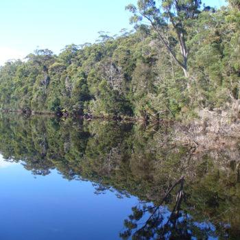 Arthur-River-reflections-cruise-4