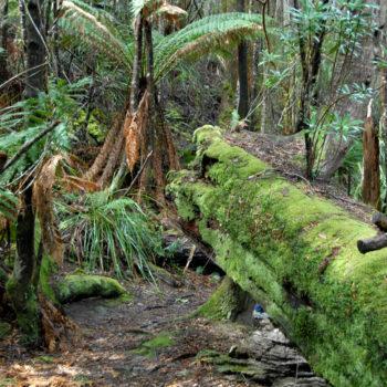 fallen-log-covered-in-moss