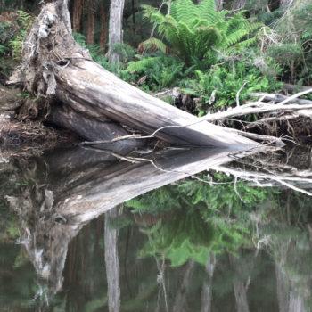 stump-reflections