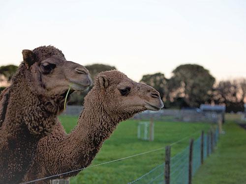 Tarkine Animal Farm