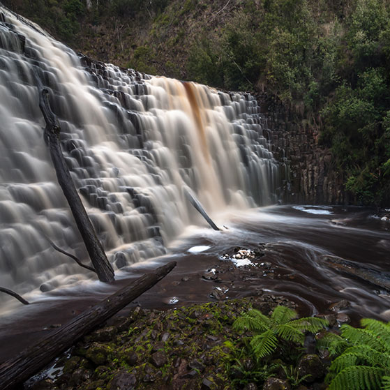 Dip Falls and the Big Tree Reserve